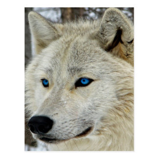 Postal observada azul de White Wolf