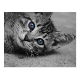 Postal observada azul del gatito