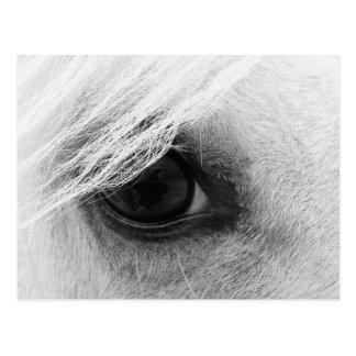 Postal Ojo del caballo en blanco y negro