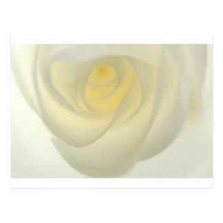 Postal Ojo del rosa de la nata