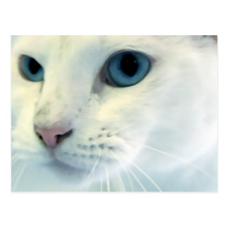 Postal Ojos azules