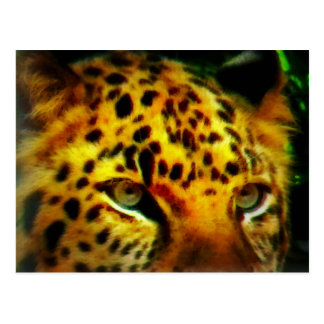 Postal Ojos de Jaguar