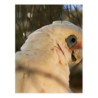 Postal Ojos del pájaro