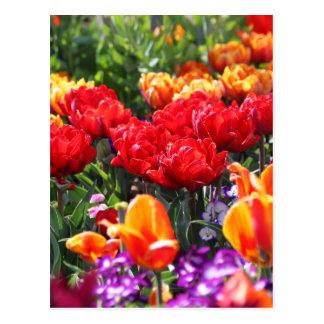 Postal Ondas florales del carmesí de Falln
