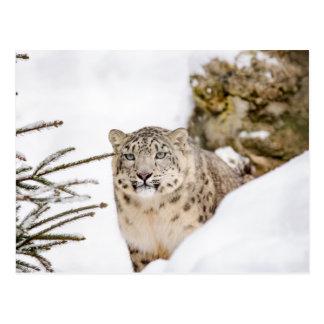 Postal Onza en la nieve