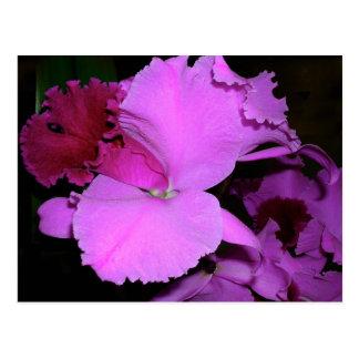 Postal Orquídea