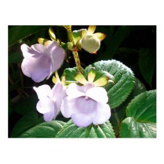 Postal Orquídea de la púrpura de Fiji