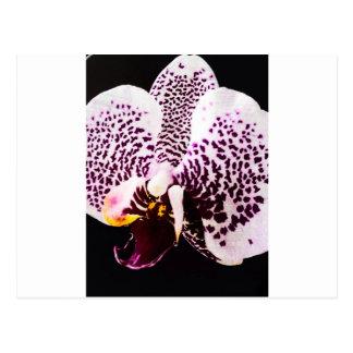 Postal Orquídea del vintage