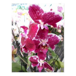 Postal Orquídea púrpura
