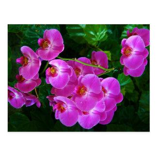 Postal Orquídeas