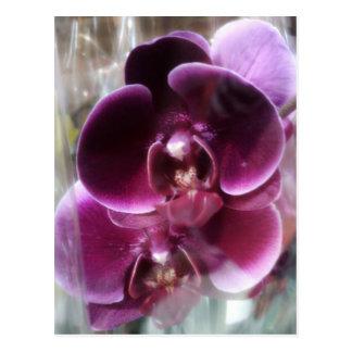 Postal Orquídeas de polilla púrpuras oscuras