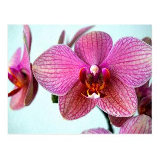 Postal Orquídeas rosadas