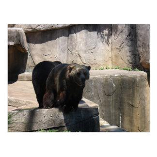 Postal Oso del parque zoológico de Milwaukee