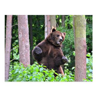 Postal Oso grizzly que se coloca alto en las maderas