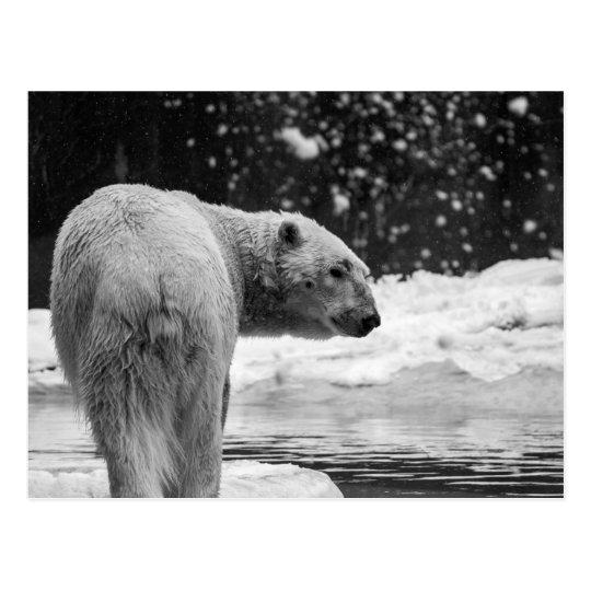 Postal Oso polar en la nieve