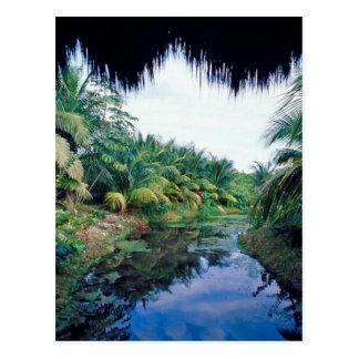 Postal Paisaje del río de la selva del Amazonas
