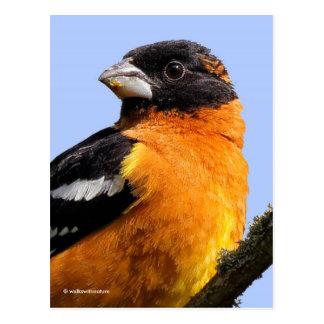 Postal Pájaro de cabeza negra hermoso en un árbol