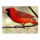 Postal Pájaro de estado de Carolina del Norte - cardenal