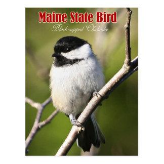 Postal Pájaro de estado de Maine - Chickadee