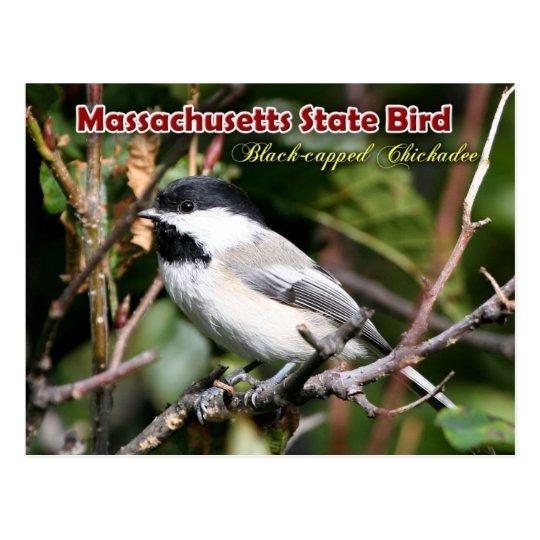 Postal Pájaro de estado de Massachusetts - Chickadee