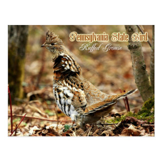 Postal Pájaro de estado de Pennsylvania: Urogallo