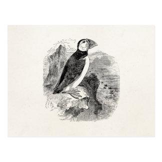 Postal Pájaro del frailecillo de los 1800s del vintage -