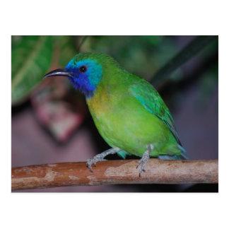 Postal pájaro enmascarado azul de la hoja