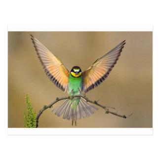 Postal Pájaro hermoso