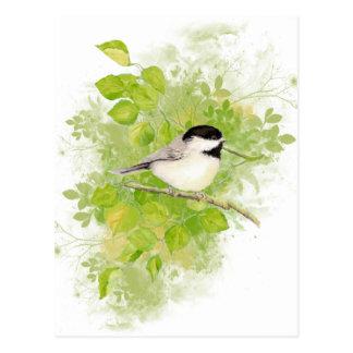 Postal Pájaro lindo del Chickadee en árbol de álamo