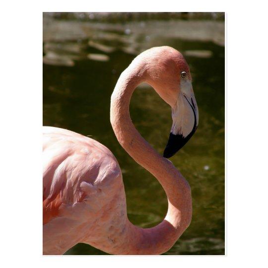 Postal pájaro rosado del flamenco
