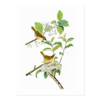 Postal Pájaros Amarillos-breasted América de Juan Audubon