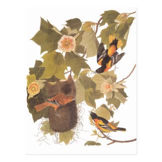 Postal Pájaros de Baltimore Oriole de Audubon en árbol de