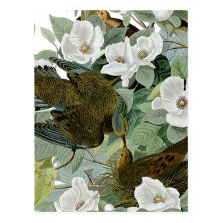 Postal Pájaros de John James Audubon de la paloma de