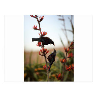 Postal Pájaros de Tui en arbusto del lino de Nueva