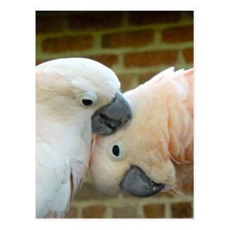 Postal Pájaros del amor