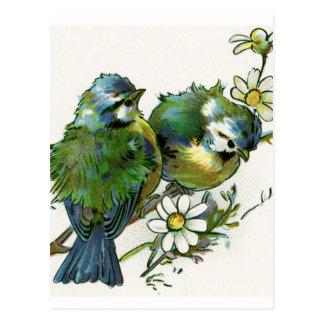 Postal Pájaros del azul del vintage