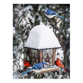 Postal Pájaros en alimentador del pájaro en invierno