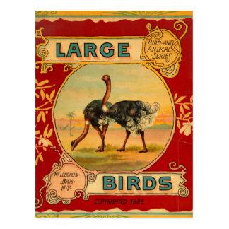 Postal Pájaros grandes