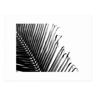 Postal Palma, blanco y negro