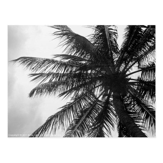 Postal Palma de coco