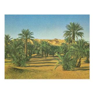 Postal Palmeras, EL Adjal, Libia del lecho de un río seco