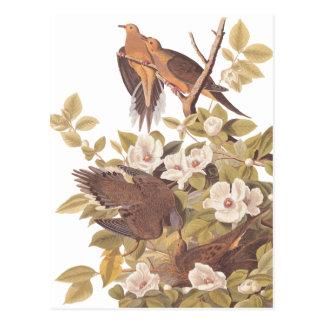 Postal Paloma de la tortuga de Carolina de Audubon