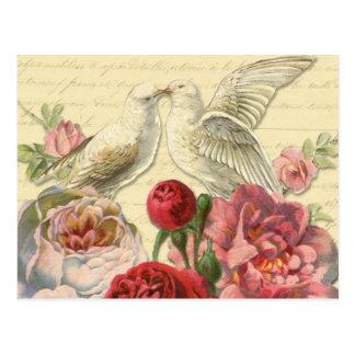 Postal: Palomas del vintage con los rosas Postal