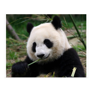 Postal Panda