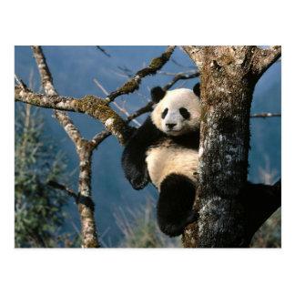 Postal Panda encima de un árbol