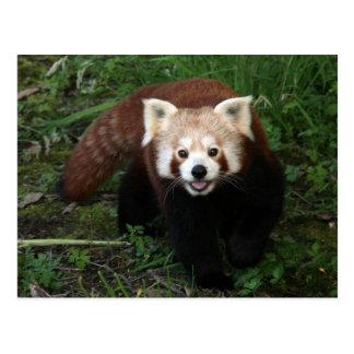 Postal Panda roja