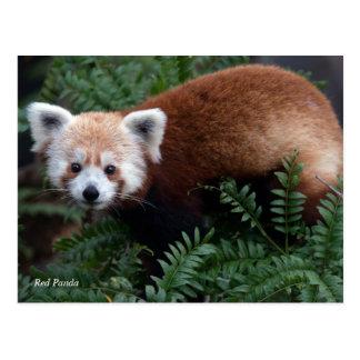 Postal Panda roja de Smithsonian el |