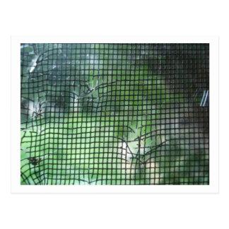 Postal Pantalla rasgada de la ventana