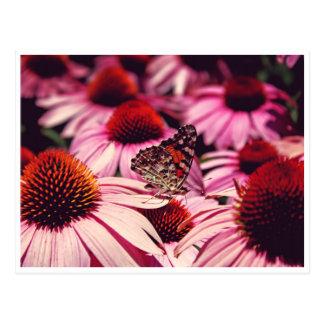 Postal Papillon