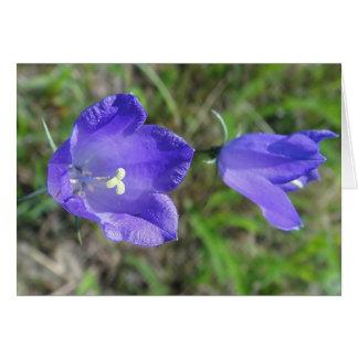 Postal pareja azul de campanilla, en blanco tarjeta de felicitación